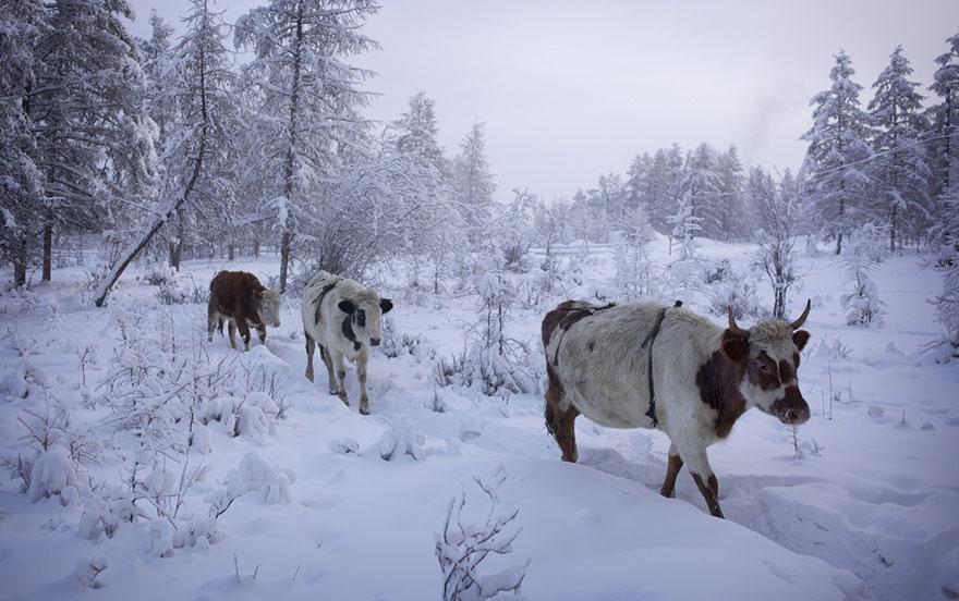 cel mai rece sat de pe pamant 5