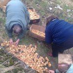 [VIDEO] Cineva a abandonat 1000 de pui de gaina lasandu-i sa moara